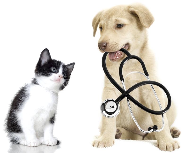 Veterinární doplňky